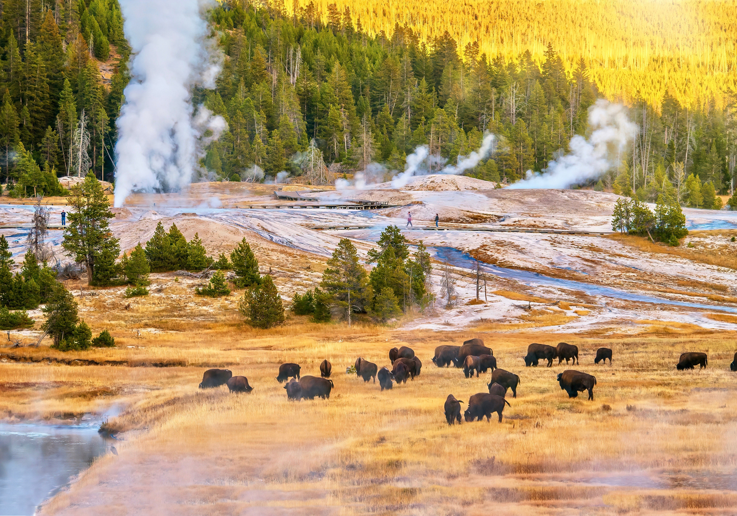 Upper-Geyser-Basin-in-Yellowstone-National-Park